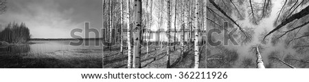 Triptych with black and white pictures of Finnish forest with Birch trees and lake