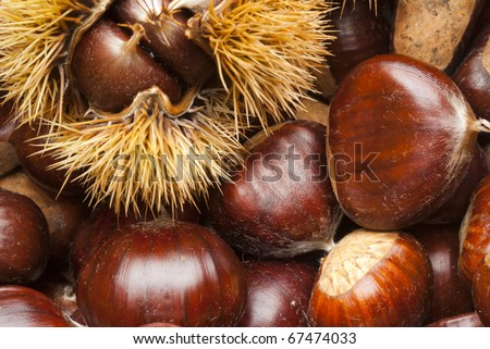 triumph of chestnuts