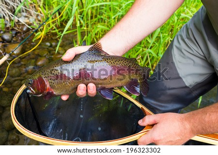 Trophy rainbow trout are common on the Lower Deschutes River in Oregon during the salmonfly hatch. Here a fly fisherman holds his catch. - stock photo