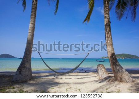 Tropic sea coast with palms and hammock