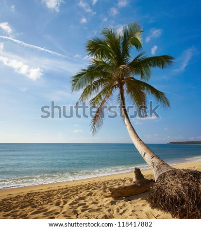 Tropic view on sea cost with palms, sand, and sea. Philippines north. Panoramic picture - stock photo