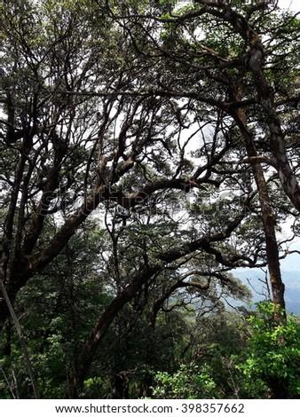 tropical Amazon rain forest background - stock photo