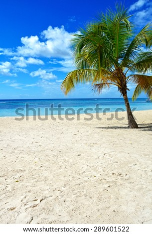 Tropical background (copy space) - stock photo