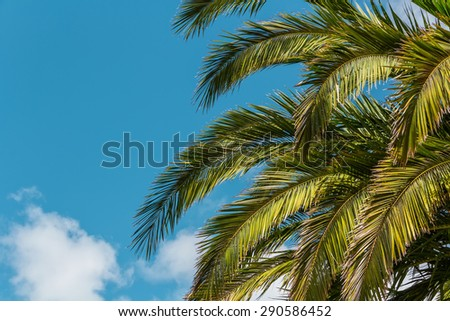 Tropical Background. Palm leaves  on blue sky background - stock photo