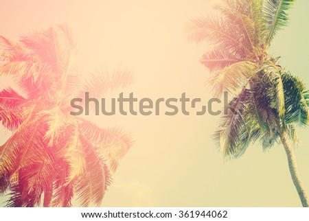Tropical  background with palm trees in sun light. For Holiday travel design. Toned vintage pastel effect - stock photo