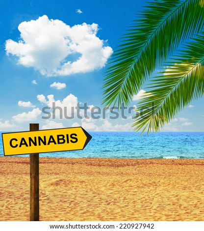 Tropical beach and direction board saying CANNABIS - stock photo