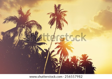 Tropical beach background with coconut palm tree silhouettes at sunset.  Instagram effect (vintage). - stock photo