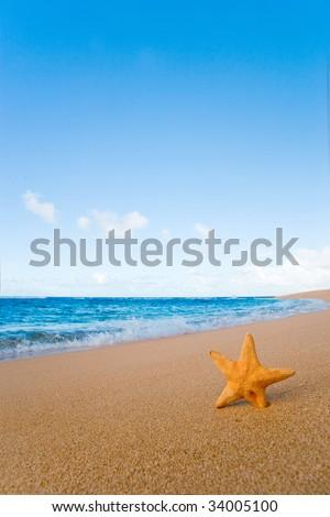 tropical beach background with starfish in kauai, hawaii - stock photo