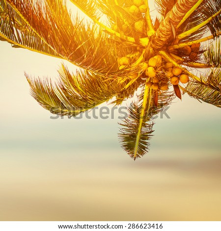 Tropical beach banner background. Coconut palm tree and blurry ocean.  - stock photo