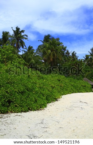 Tropical beach on Maldives in the Indian Ocean.