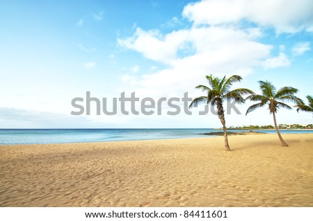 Tropical Beach Palm Tree in lanzarote, canary islands - stock photo