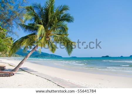 Tropical beach under a palm - stock photo
