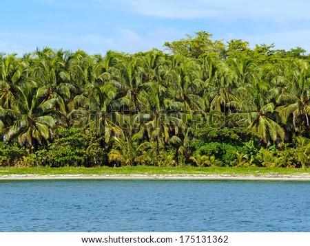 Tropical beach with a green wall of lush vegetation, Zapatillas Islands, Bocas del Toro, Caribbean sea, Panama - stock photo