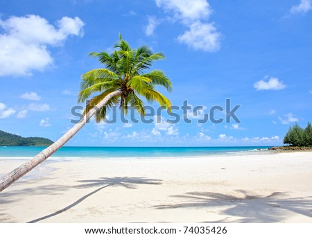 Tropical beach with beautiful palm trees on the sand and sun in blue sky. Summer nature scene. - stock photo