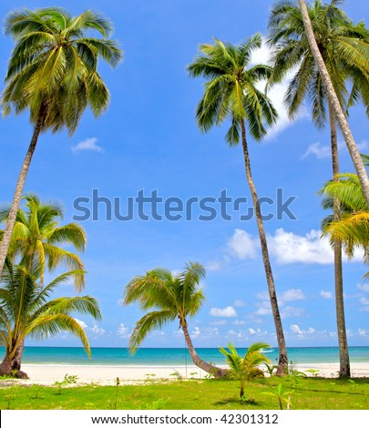 tropical beach with coconat palm. With a blue sky - stock photo