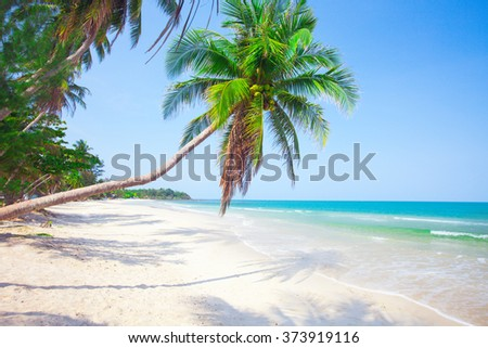 tropical beach with coconut palm - stock photo