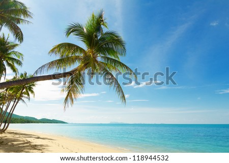 Tropical beach with coconut palm trees - stock photo