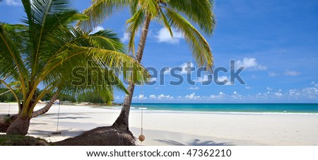 Tropical Beach with coconut palm trees and turquoise ocean