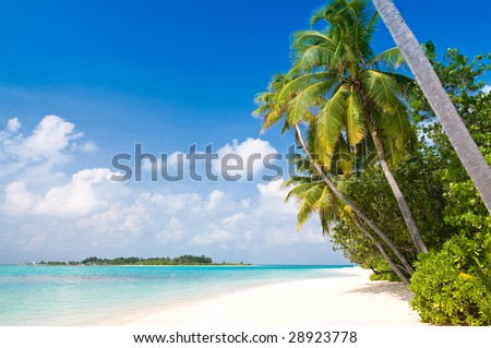 Tropical Beach with coconut palm trees and turquoise ocean (more tropical beaches in my portfolio)