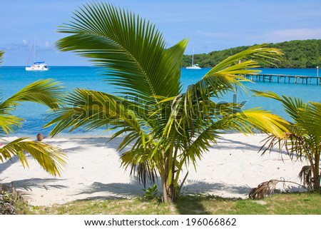 Tropical beach with exotic palm trees on the sand.Thailand