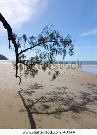 Tropical beach with overhanging tree - stock photo