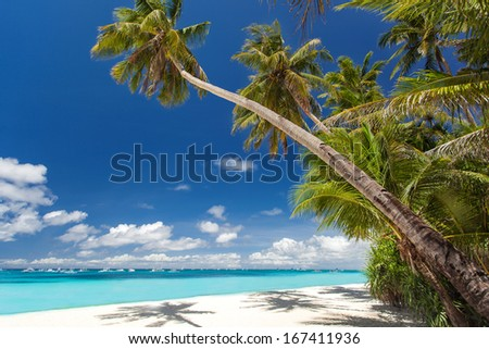 Tropical beach with palm and white sand, Philippines - stock photo
