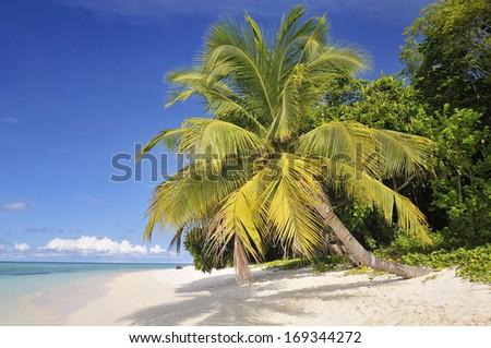 Tropical Beach with Palm on Sipadan Island, Malaysia - stock photo
