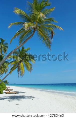 tropical beach with palm tree - stock photo