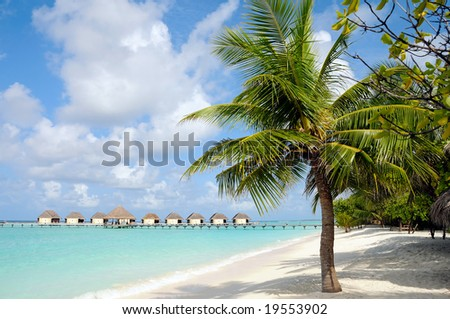 tropical beach with palm tree and water villas