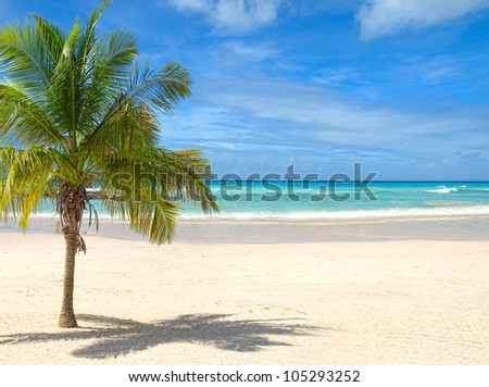 Tropical beach with palm tree on a sunny day - stock photo