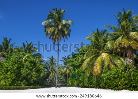 tropical beach with palm tree on the island, Maldives