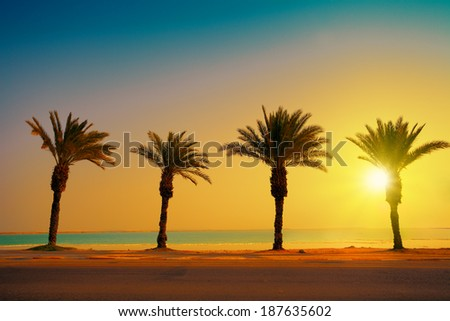 Tropical beach with palm trees at sunset background. Dead Sea beach in Ein Gedi In Israel - stock photo