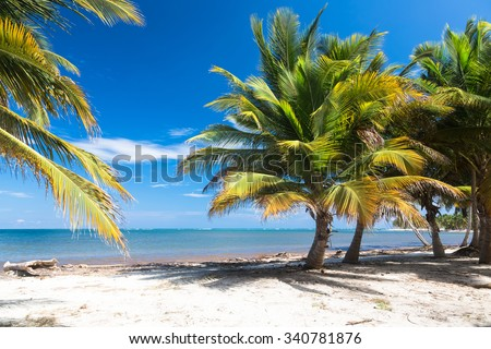 Tropical beach with palm trees, Dominican Republic - stock photo