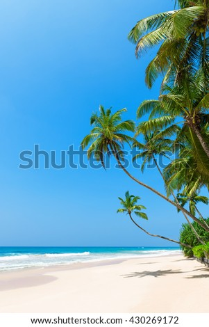 Tropical beach with palm trees on ocean shore and clean sand at sunny day - stock photo
