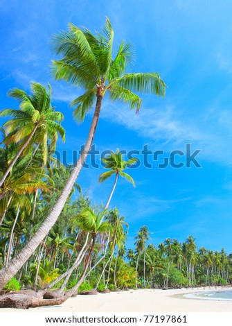 Tropical beach with palm trees under blue sky - stock photo