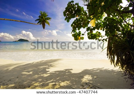 tropical beach with palms - stock photo