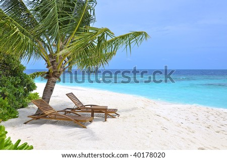 tropical beach with sun loungers and palm tree