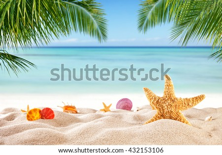 Tropical beach with various shells in sand, copyspace for text. Concept of summer relaxation - stock photo