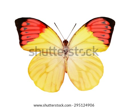 Tropical butterfly on white - stock photo
