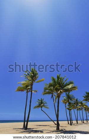 Tropical coast with ocean and palm trees, Sunrise Beach, Fort Lauderdale, Florida, United States.  - stock photo