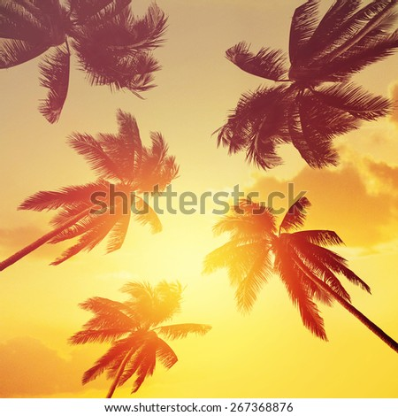 Tropical coconut trees at sunset - stock photo
