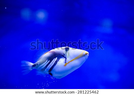 tropical colorful sea fish