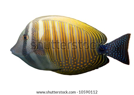 Tropical coral  fish underwater