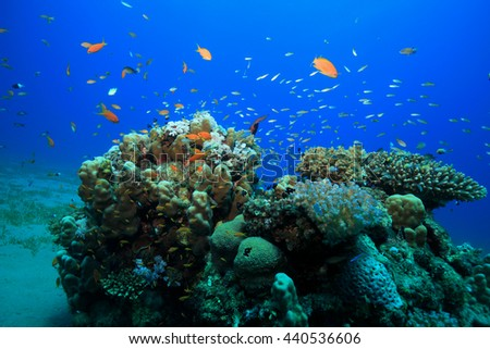 Tropical coral reef and colorful fish in the red sea