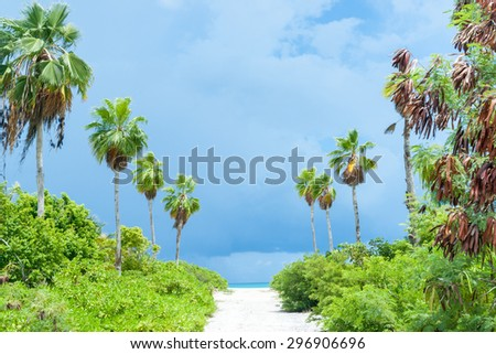 Tropical dark clouds of pending storm brighten and light lime green vegetation on path to beach as palms sway in breeze. - stock photo