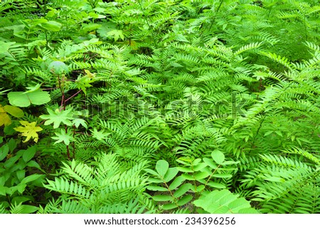 tropical fern background - stock photo