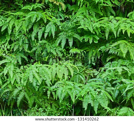 Tropical fern leaves background - stock photo