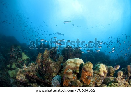 Tropical fish and coral reef, Bonaire