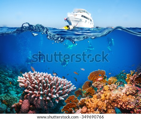 Tropical Fish and Coral Reef on Red Sea - stock photo