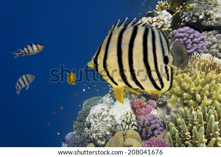 Tropical fish and Hard corals in the Red Sea - stock photo